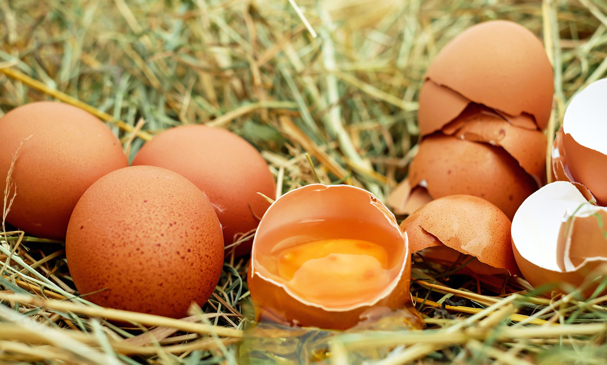 Kerek tojás sütő forma | tancsicsmuvelodesihaz.hu