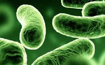 kórokozó baktériumok)