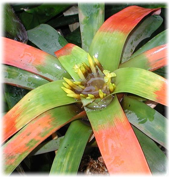 pontellenőrzés helminthosporium levelekkel)