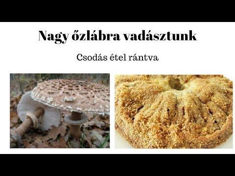tisztítja a paraziták és gombák testét