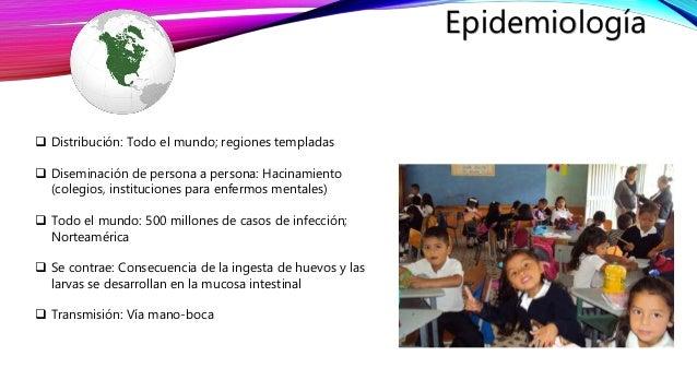 enterobius vermicularis epidemiológia