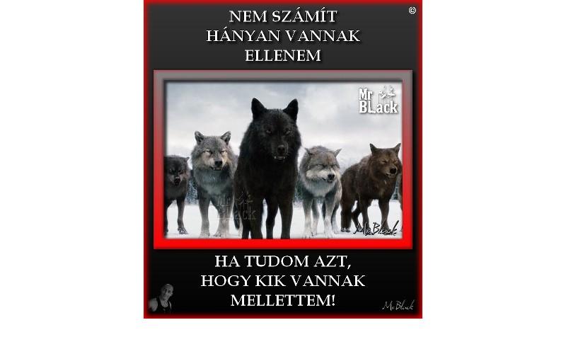 MINDENKI ELLENEM VAN-angol fordítátancsicsmuvelodesihaz.hu szótár
