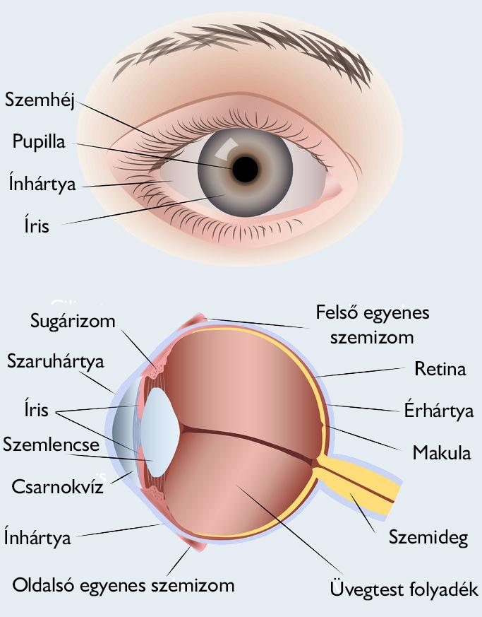 Ellenségek a szemünkben