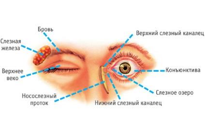 szemölcsök mennek fel hogy néznek ki a szemölcsök cauterization után