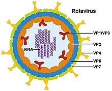vírusbiológia 1 megrontott