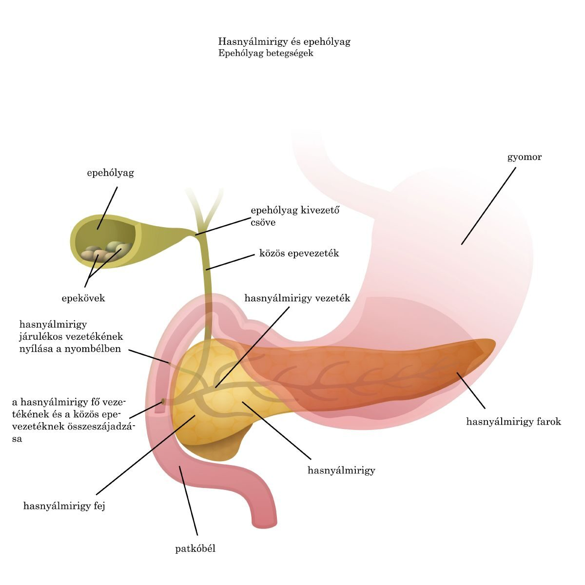 paraziták tüneteinek diagnosztikai kezelése intim helyeken papillómák