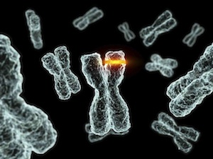 hpv és rákos sejtek
