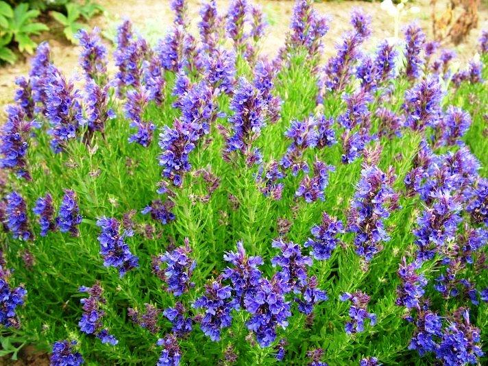 kerti természetes gyógymódok