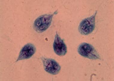protozoa giardia spp