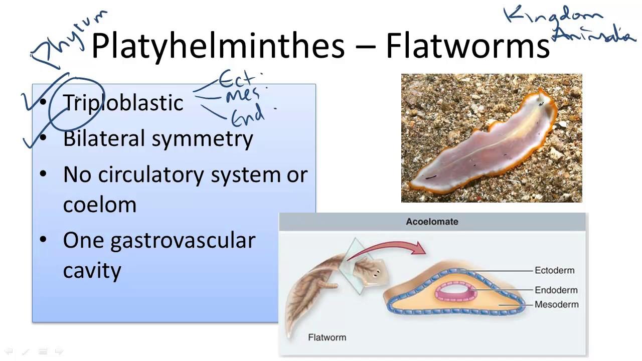 mennyire érvényes az enterobiosis és a petesejt biocid paraziták