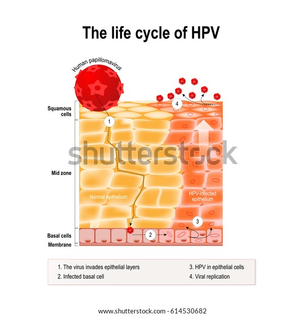 humán papillomavírus 3