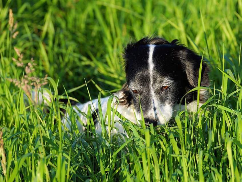kert a kutyában meddig