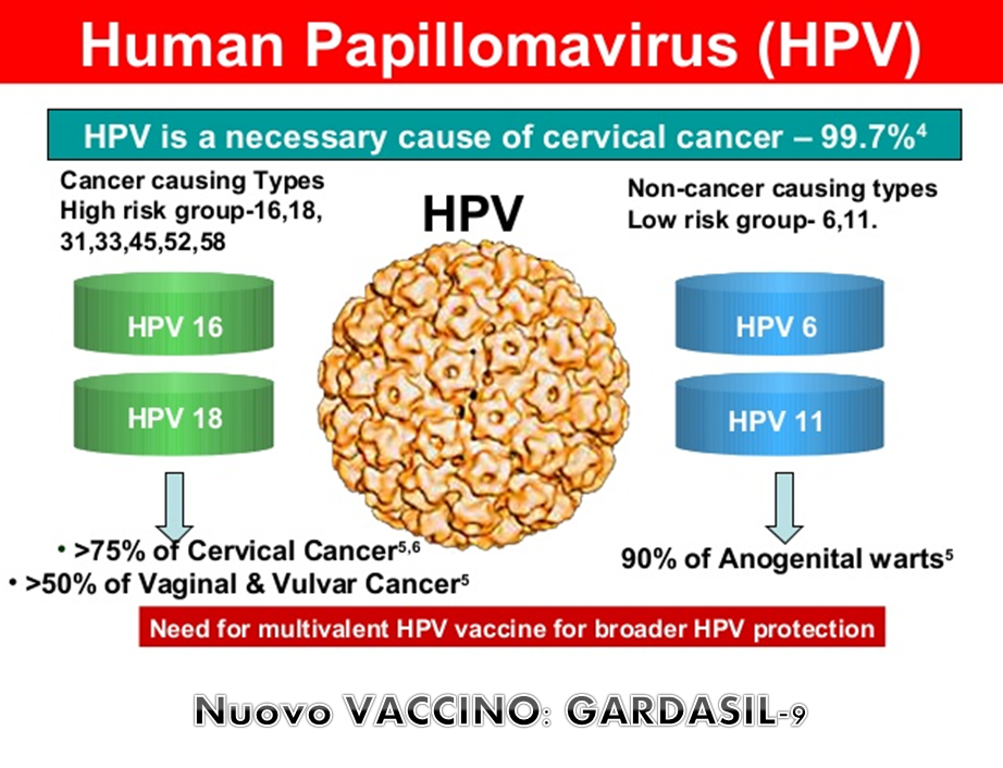papilloma vírus il