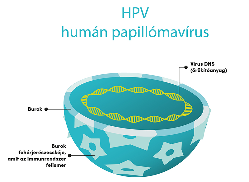magas kockázatú típusú humán papillomavírus