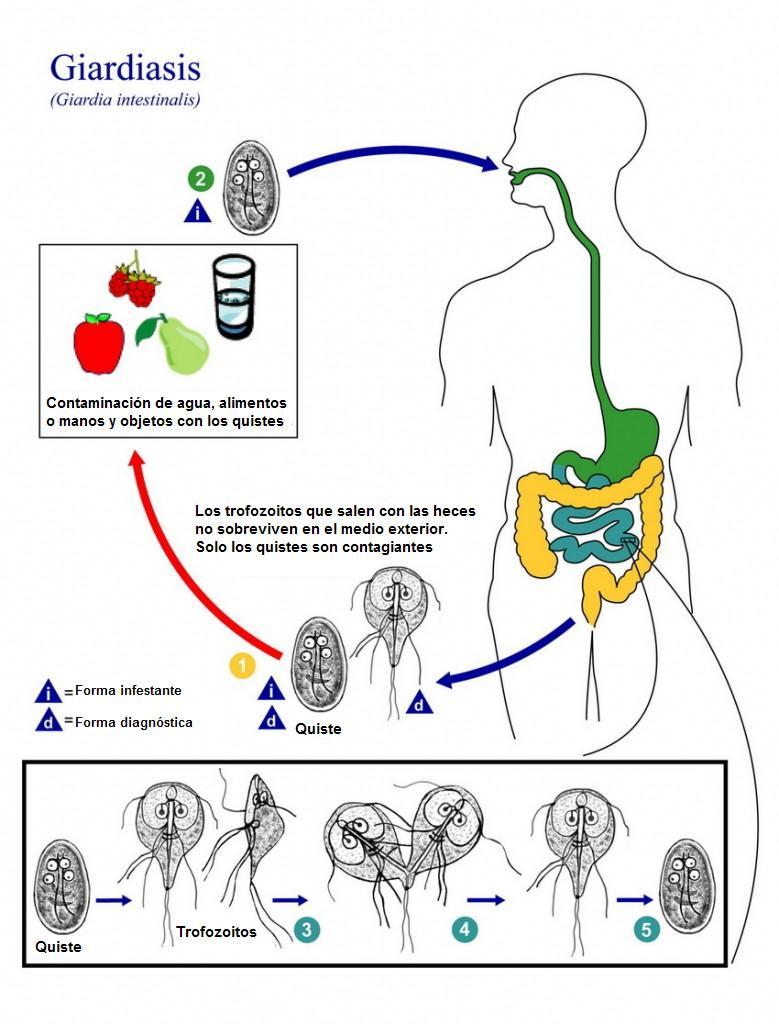 viszketés a nemi szemölcsök után emberi papillomavírus tünetei emberekben