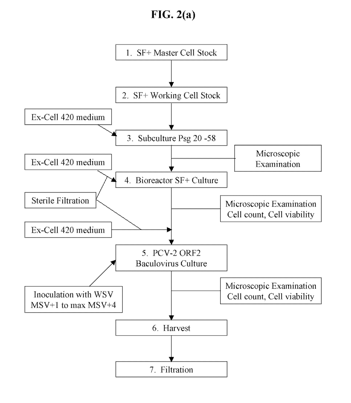 bilaterális légúti papillomatosis)