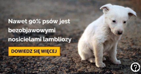 ködös giardia és psa leczenie)