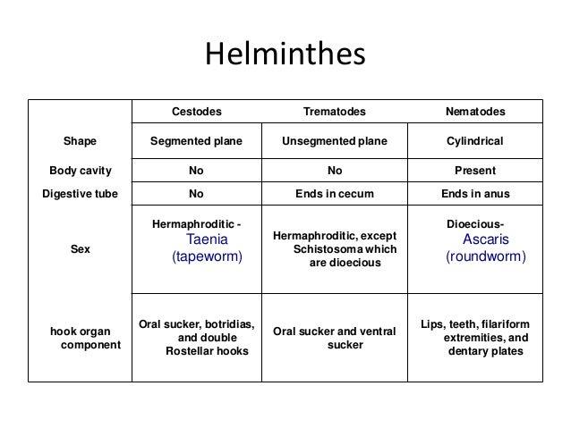 biohelminth pinworm vagy geohelminth