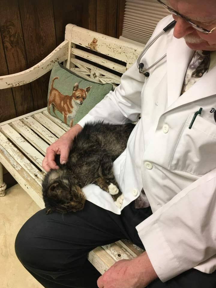 a macskát kezelték a leghatékonyabb helmintás tabletták