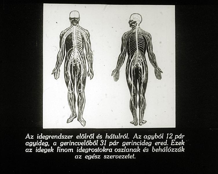 Trombocitémia (Trombocitózis) - EgészségKalauz