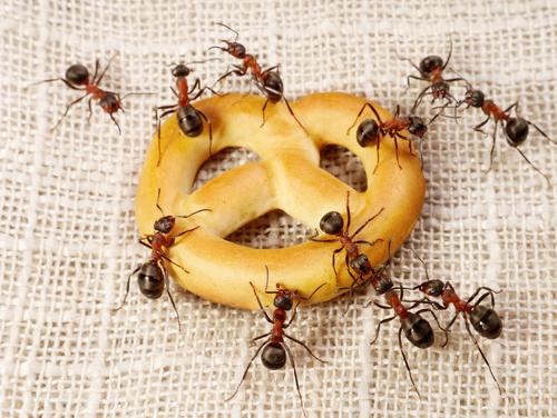 a méh papillómáját kezelik)