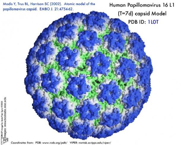 humán papilloma vírus tumor)