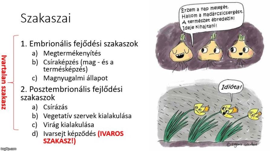 ivartalan nemathelmintek szaporodnak)