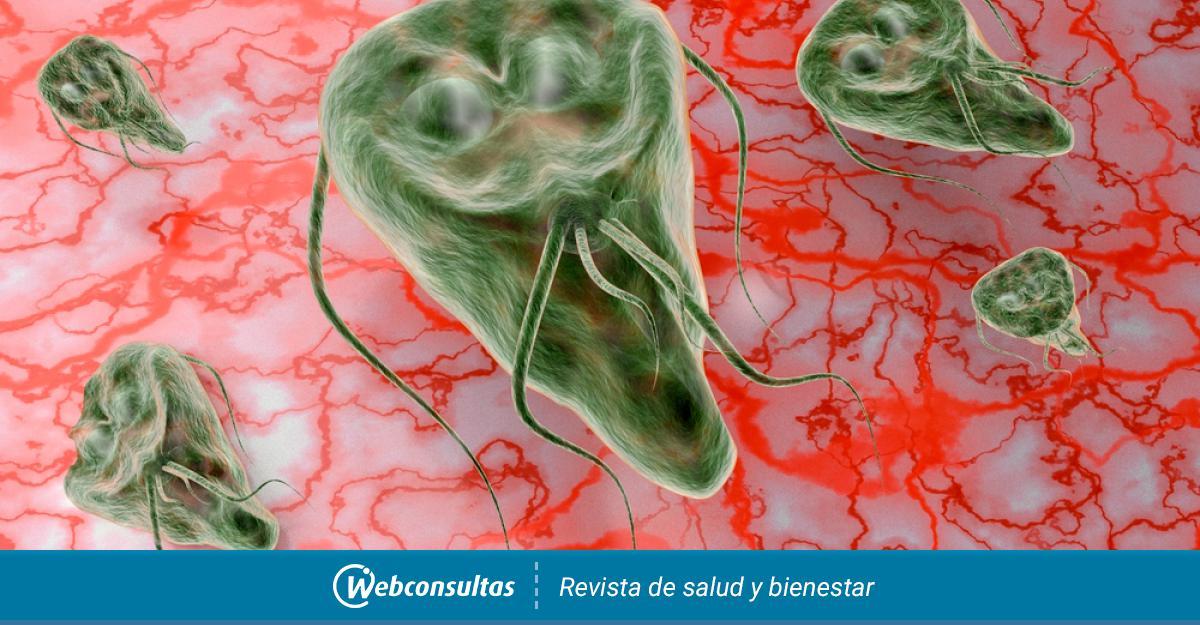 adag a giardiasis nifuratelre