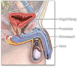 Enterobiasis (pinworms) gyermekeknél - 5 éves pinworm gyermek