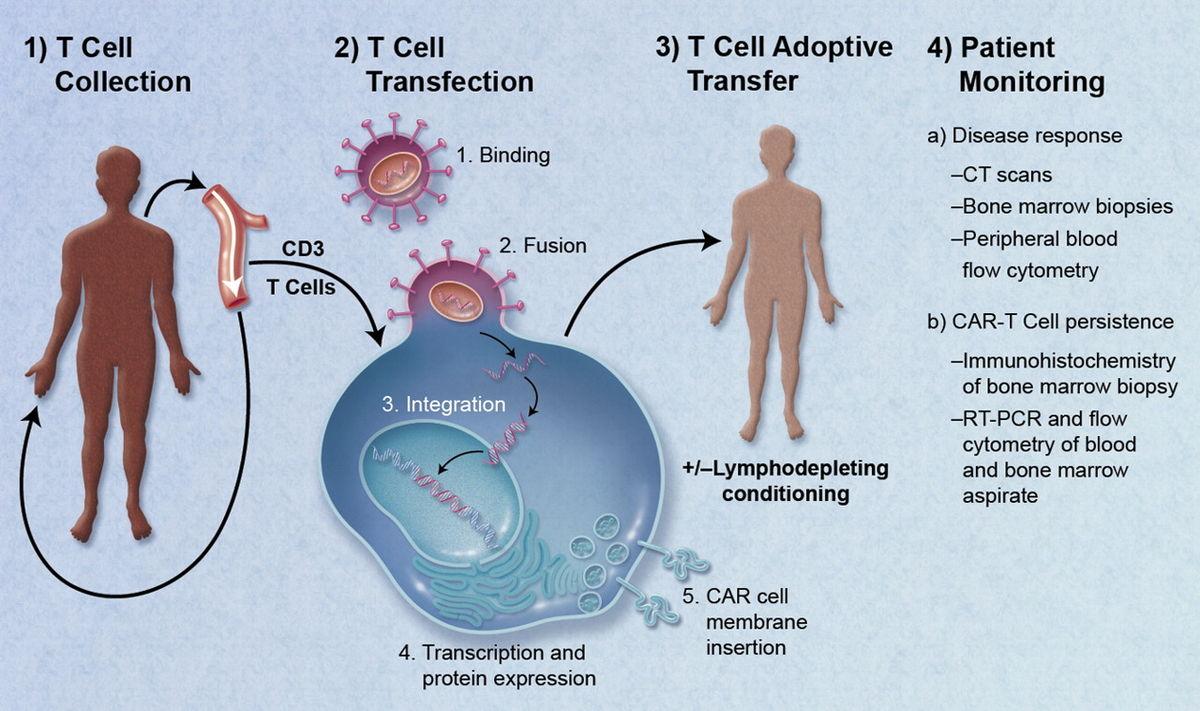 rák emberi géntechnológia