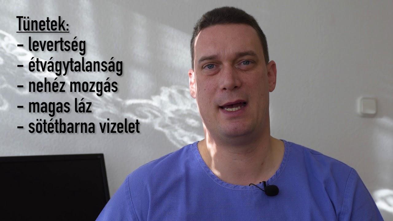 felnőtt tünetek és a gömbférgek kezelése)