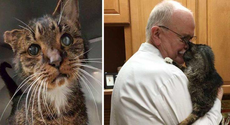 a macskát kezelték mennyire gyakori a vestibularis papillomatosis