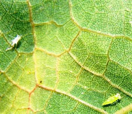 Parazita kezelõ klinika áttekintése, Negatív hpv és rák