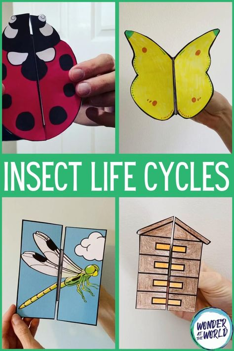 ovis rovarok