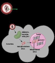 rezisztens papilloma vírus