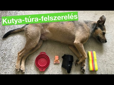 pinworms kutyák tüneteiben)
