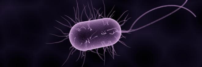 baktériumok a szemben)