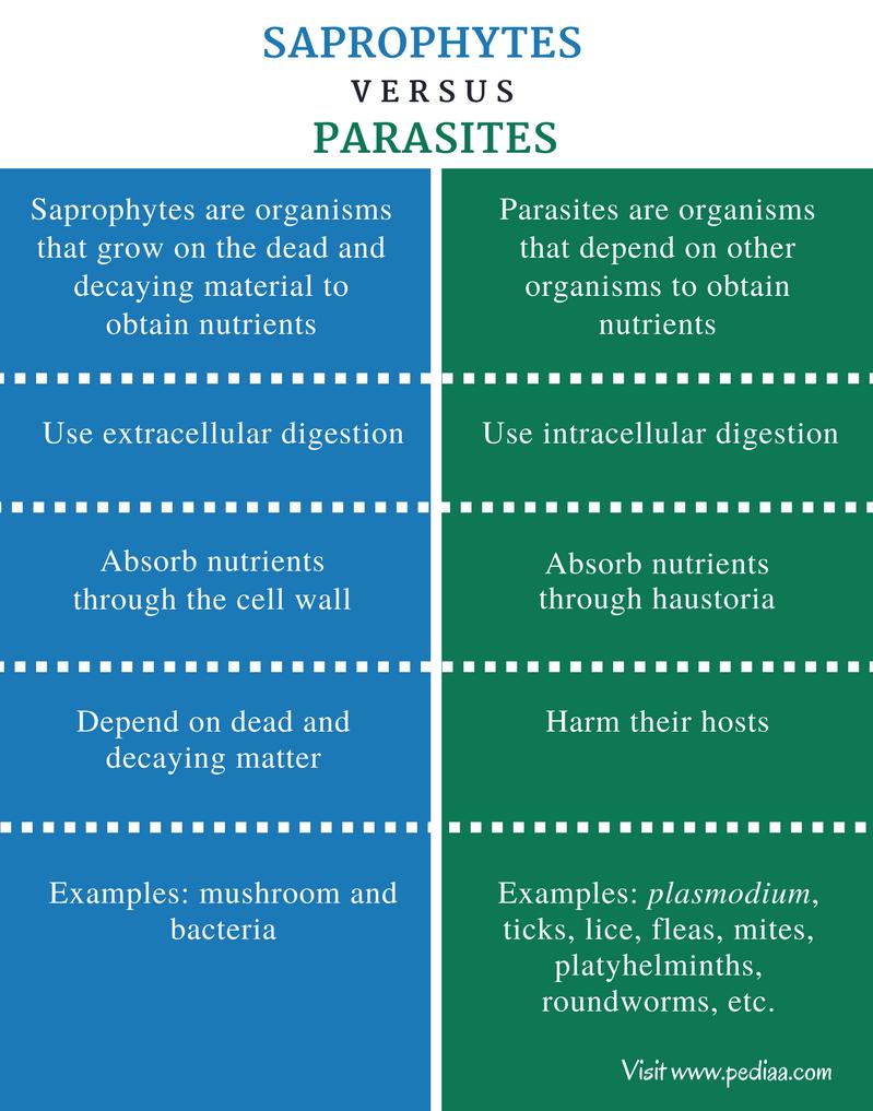 papilloma vírus átterjedése emberre végbélrák nyirokcsomó érintettséggel
