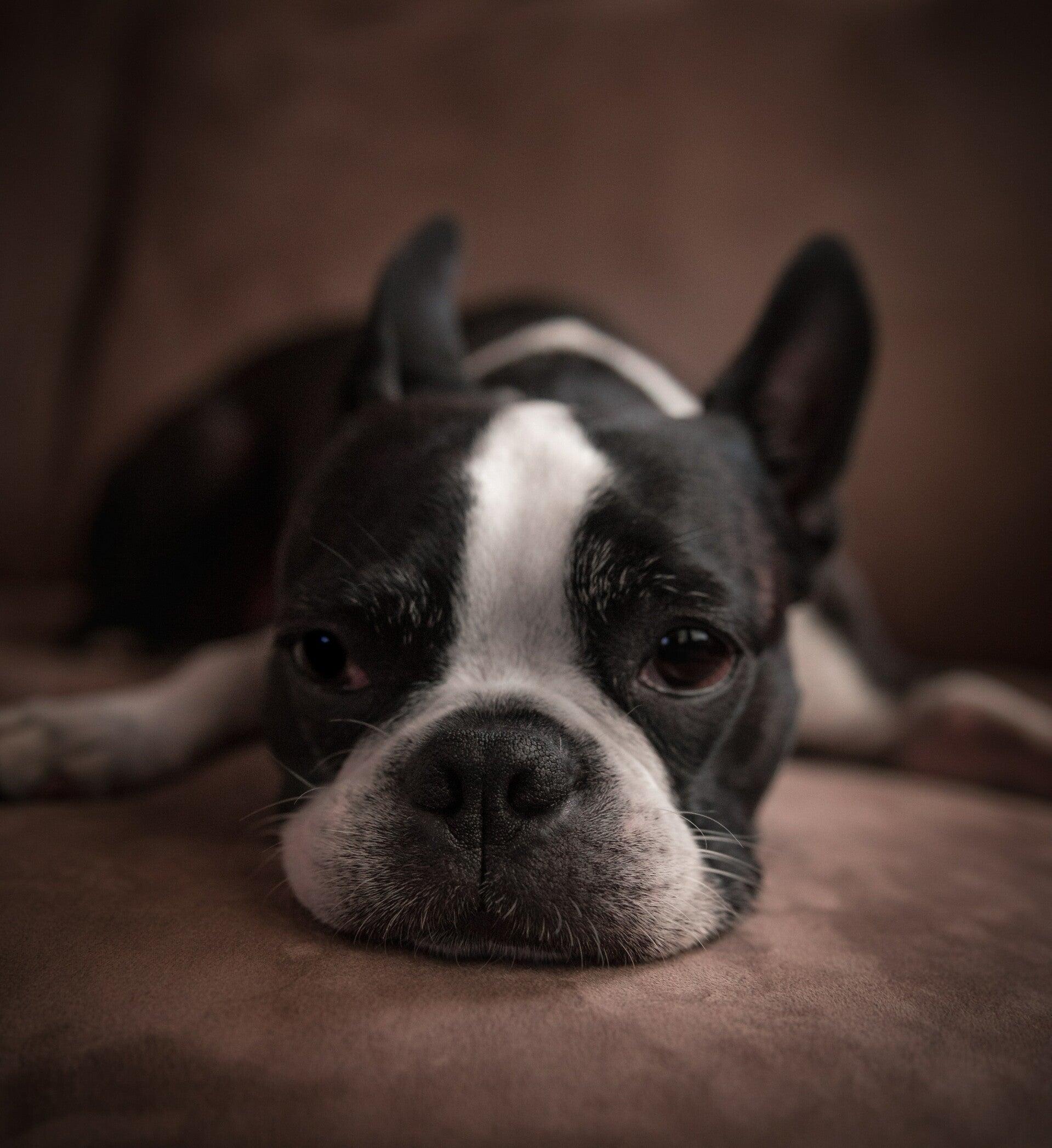 Hpv virus tunetei ferfiaknal, Giardia virus hond