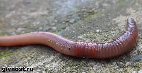 a kostroma papilloma megszünteti az árat parazita gyermek pinwormok