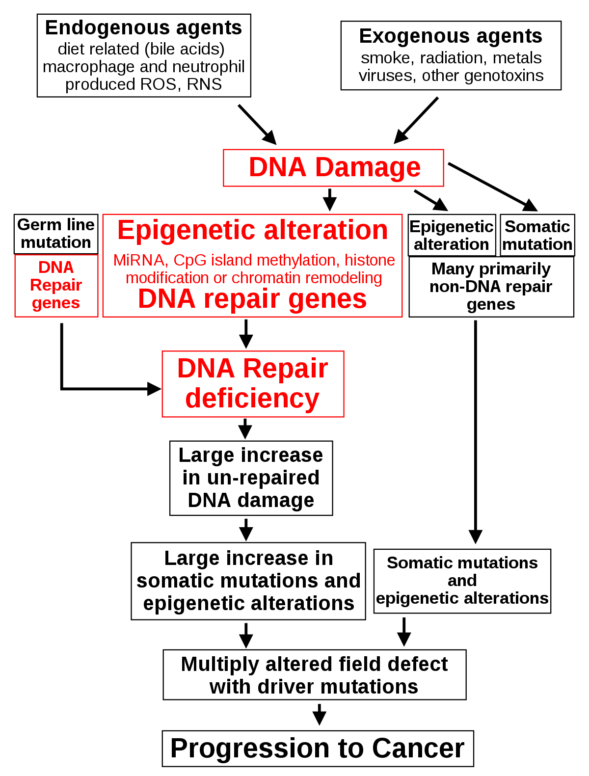 giardia besmettelijk mens paraziták és a giardia kezelés