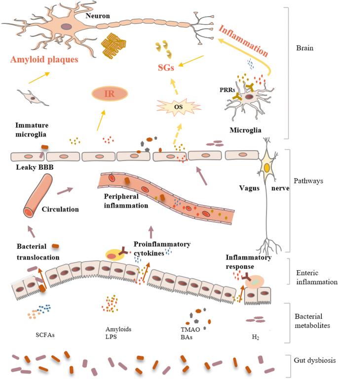 dysbiosis felülvizsgálata
