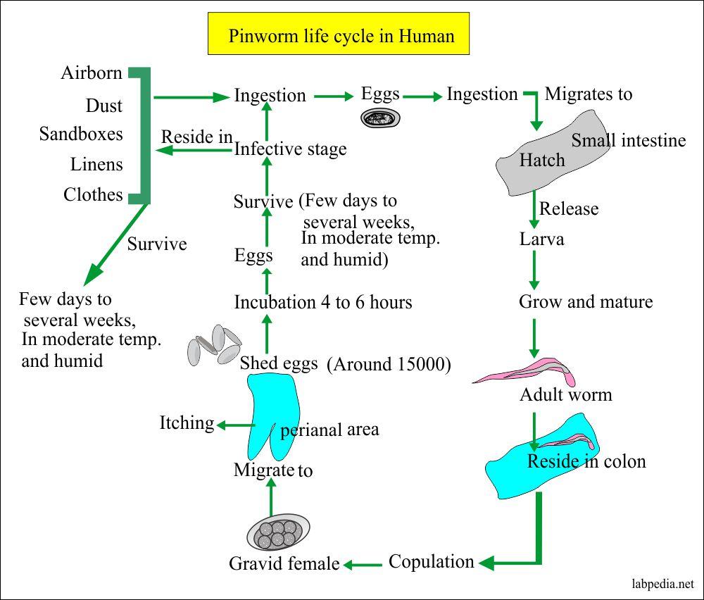 Pinworms csecsemők tünetei és kezelése, A férgek jelei egy csecsemőben