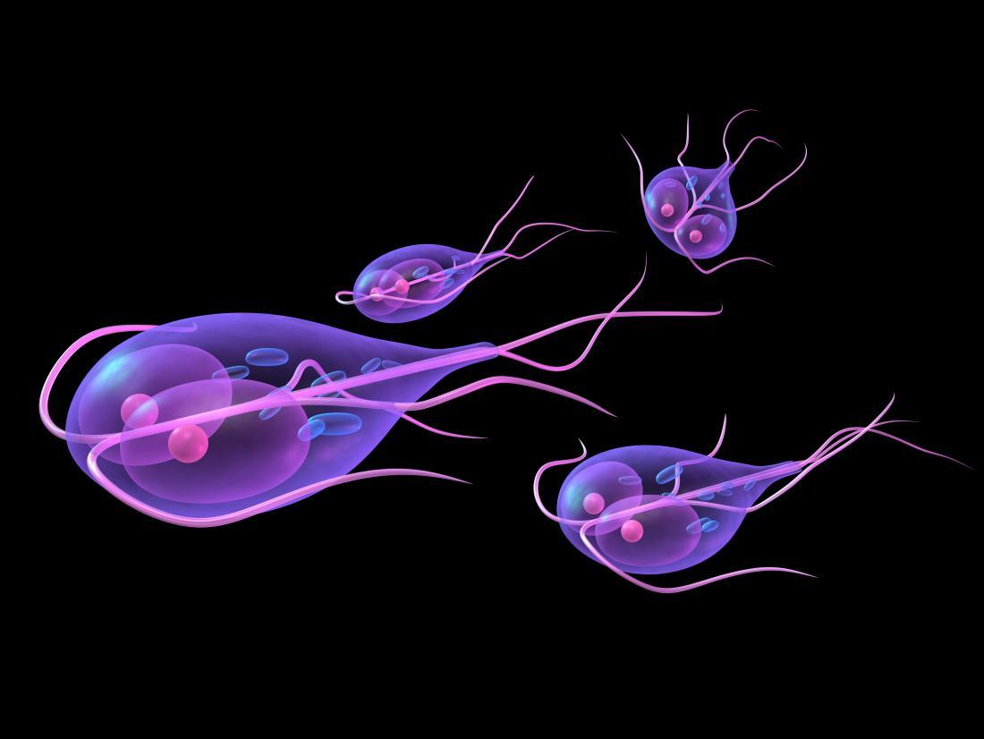 papilloma vírus megnagyobbodott nyirokcsomók schistosomiasis vakcina