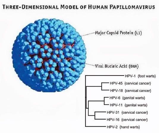 humán papillomavírus változásai vannak jelen