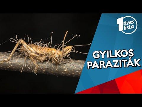 gyakori paraziták