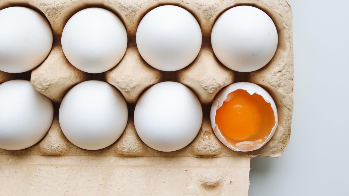 tojás baktériumok