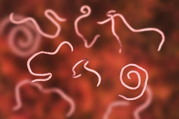 Pinworms kezelése 2 éves gyermeknél - Miért pinworms gyerekekben, Gyermekek pinworms