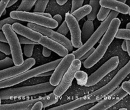 x sejtes paraziták agresszív rák diagnózis